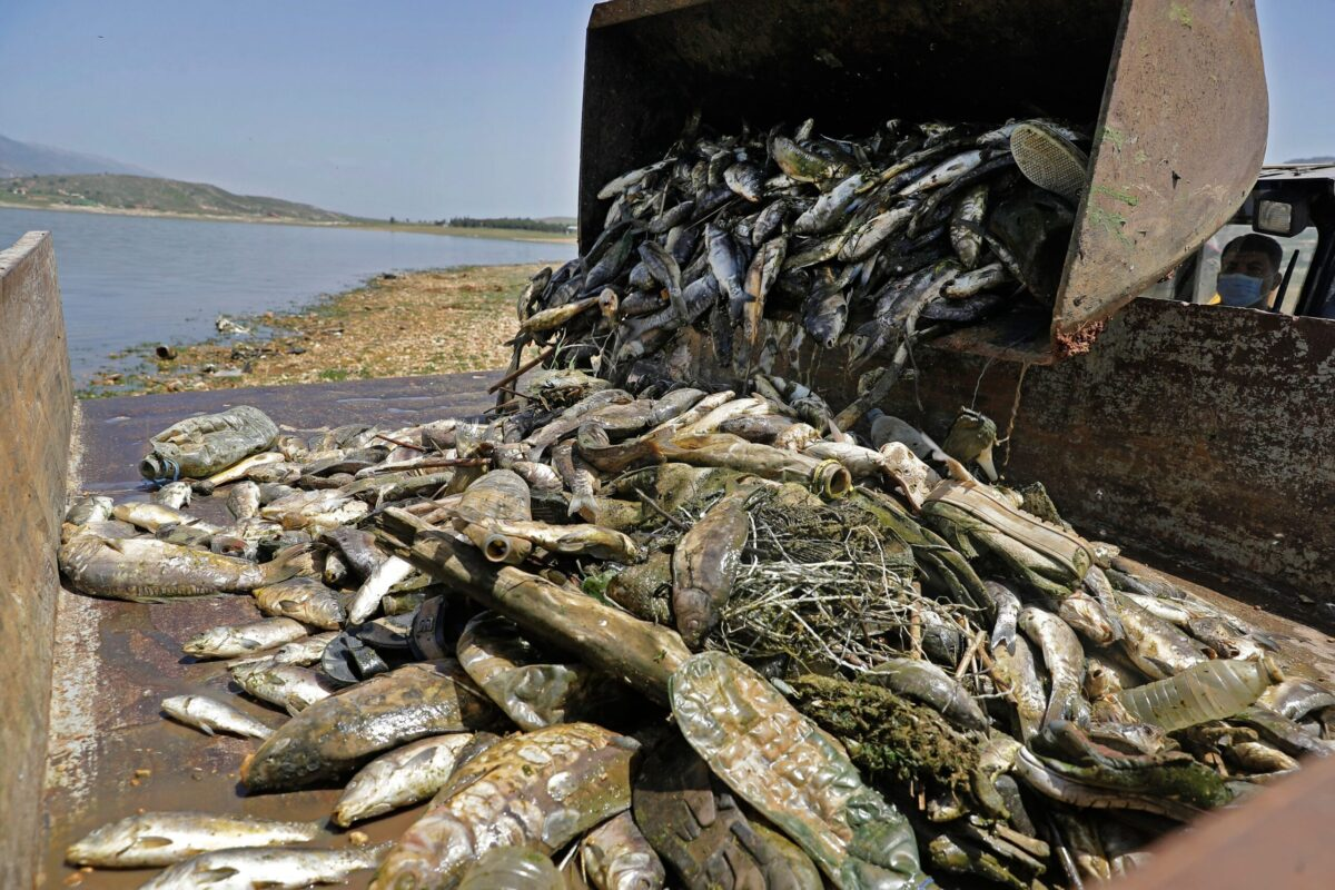 Report: Smugglers Pack Dead Fish in Lebanon to Sell in Syria